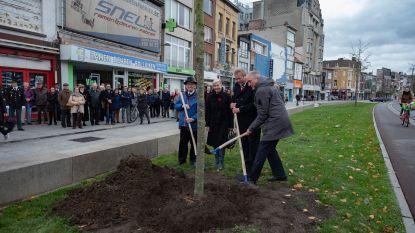 Vredesboom en gedenksteen herdenken Merksemse gesneuvelden