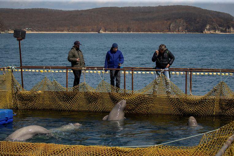 """Russische media spraken over een """"walvissengevangenis""""."""