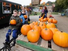 Pumpkin drive thru op de Groesbeekse Zevenheuvelenweg