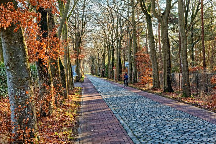 De gemeente wil 104 bomen kappen langs de Veenstraat in Molenschot, tussen de Rijksweg N282 en de kern van het dorp. Oranje stippen op de stammen lijken aan te geven welke bomen moeten wijken.