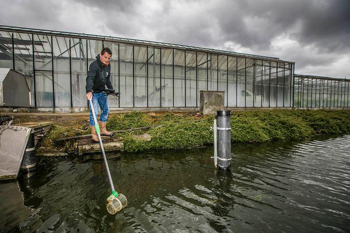 Het Hoogheemraadschap van Delfland meet de waterkwaliteit tussen de kassen.