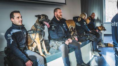 Vier Gentse politiehonden gaan samen met pensioen: pensioenfeestje mét hondenkoekjes en burgemeester De Clercq