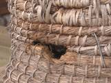 Bewoners Eschmarke in Enschede realiseren eigen bijenstal