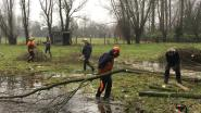 Regionaal Landschap zoekt bomen om te knotten