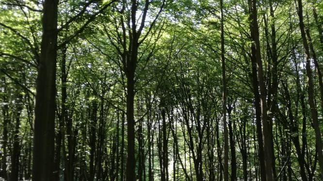 Twee hectare extra bos: Maarkedal gaat geboortebos aanleggen