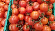 Gevreesd tomatenvirus treft mogelijk ook Frankrijk, Belgische telers nemen maatregelen
