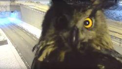 Uil 'videobombt' verkeerscamera