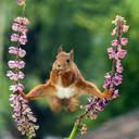 De winnende eekhoornfoto van Geert Weggen, gemaakt in zijn tuin in Zweden