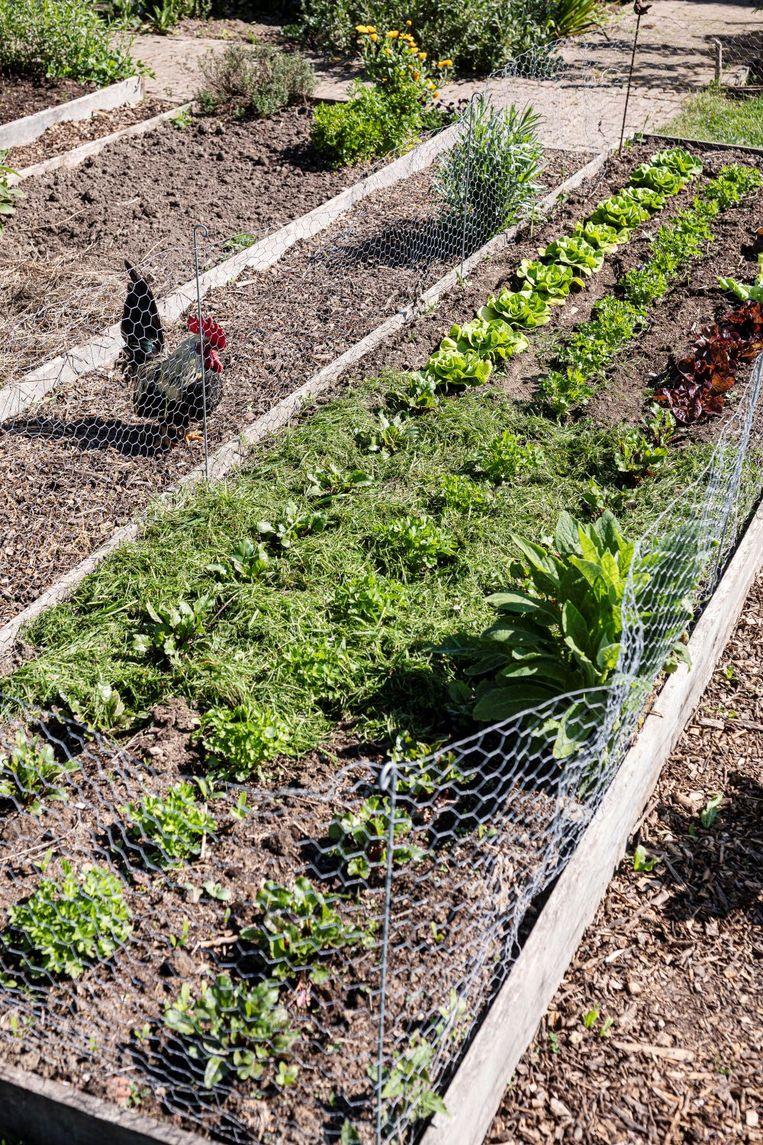 Strooi een laag gazonmaaisel van maximaal 3 cm dik tussen de groenten