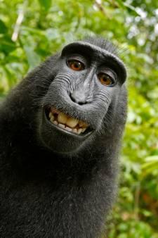 Rechter zet dierenorganisatie PETA voor aap
