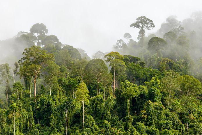 In vijftig jaar tijd is maar liefst 20 procent van de Amazone verdwenen.