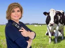 Hadden Marnix en Joany het over koeienvlees of …?
