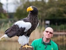 Onwerkelijk stil in Alphens vogelpark: Avifauna blijft vliegen met arenden om de routine te behouden