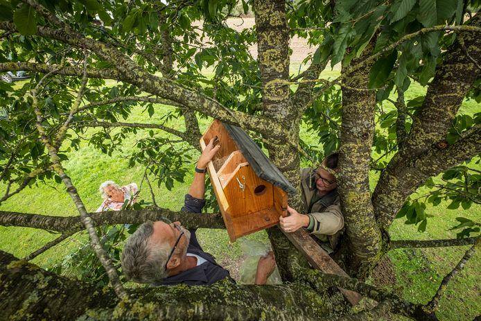 Wietske van Apeldoorn ziet hoe Adrie Hottinga en Matthijs Bootsma de uilenkast in de hoogstamfruitboom hangen. ,,De kast die er hing was eigenlijk uitgewoond en is nu vervangen door een kast die marterproof is'', vertelt ze.