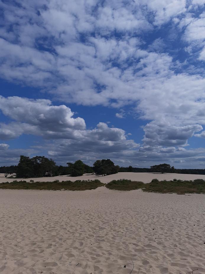 Je waant je, zeker met deze strakblauwe lucht en zonder ook maar een zuchtje wind, zo in de duinen bij Scheveningen. Maar in de Lange Duinen bij Soest is er één verschil: het ligt niet aan zee.