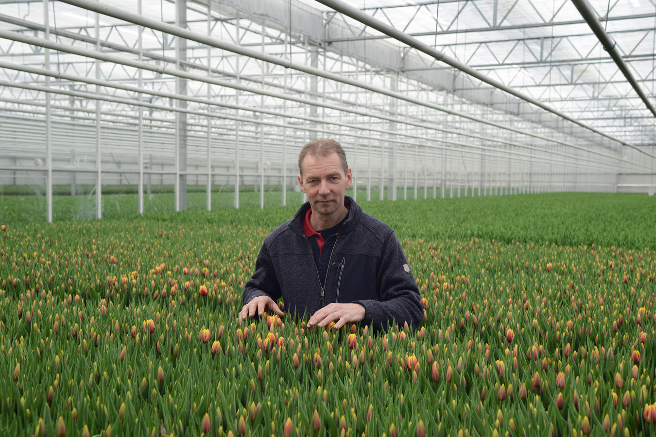 Jan Boot tussen zijn tulpen die door de pandemie nagenoeg onverkoopbaar zijn.