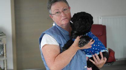 Bordeauxdog valt hondjes aan tijdens wandeling