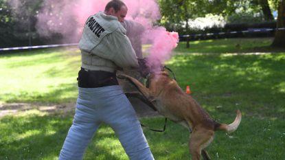 Politiehonden Joy en Beer gaan met pensioen, maar de opvolgers staan klaar