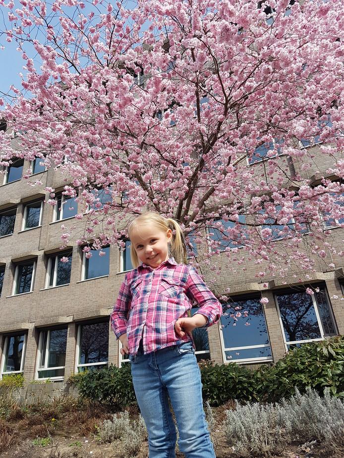 """Sabina Noordegraaf uit Ridderkerk: ,,Een mooie bloesem met ons mooie meisje. Zelfs Fayenne (3) is al fan van de 'mooie roze bomen', zoals ze ze zelf noemt. Nabij het gemeentehuis staan vier prachtige bomen op een rij."""""""