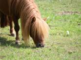 Zijn grootse paardenverhalen werden met hoon ontvangen