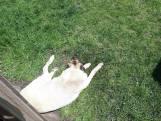 Oververhitte hond gered uit achtertuin Raamsdonksveer