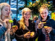 Op Utrecht CS willen ze heel Nederland aan de kiwi hebben
