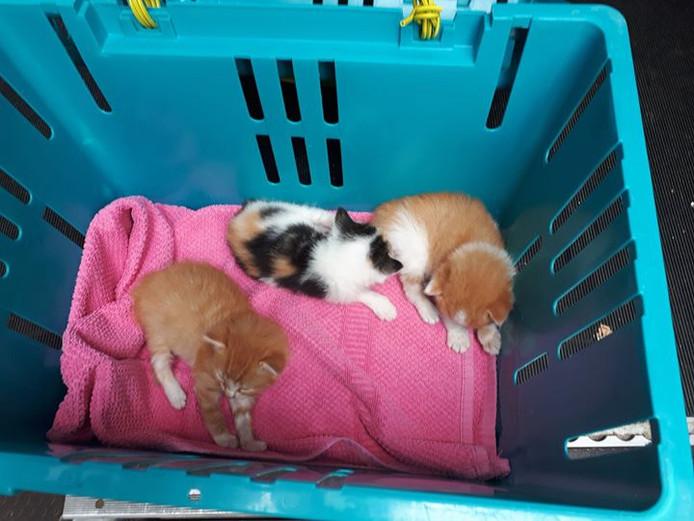 Drie van de gevonden kittens