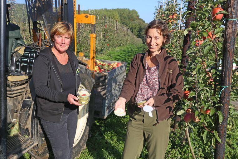 Ann De Ryck en haar collega Ann Saerens in de appelboomgaarden in Brussegem.