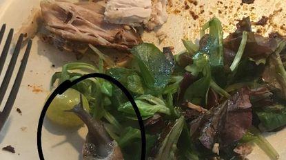 Dikke slak verstopt zich in 'gewassen' veldsla Albert Heijn