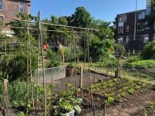 Marianne beheert het Spinozahof: 'Iedere buurt heeft  een stadsoase nodig, dat zou veel ellende schelen'