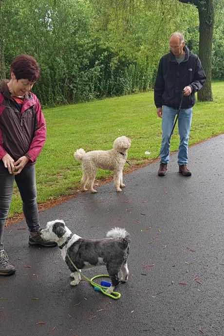 Woefcamp in Den Bosch geeft baasjes tips en tricks voor 'saaie' blokjes om met de hond