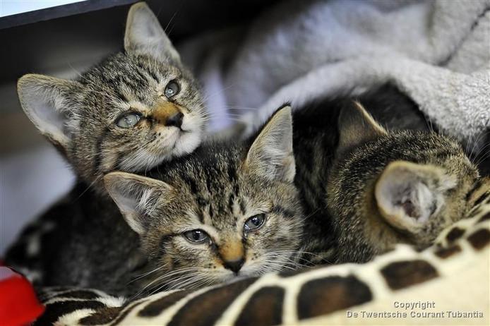 Het structurele tekort bij het DOC Hengelo wordt onder meer veroorzaakt door het feit dat het asiel per 2017 geen vergoeding meer krijgt van de Dierenbescherming voor de sterilisatie van katten.