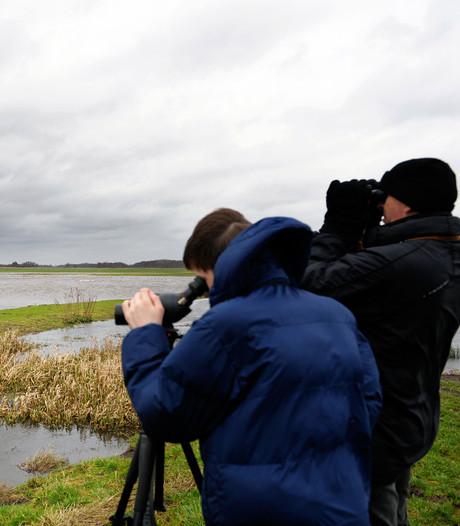 Russische trekvogels brachten vorig jaar de vogelgriep mee