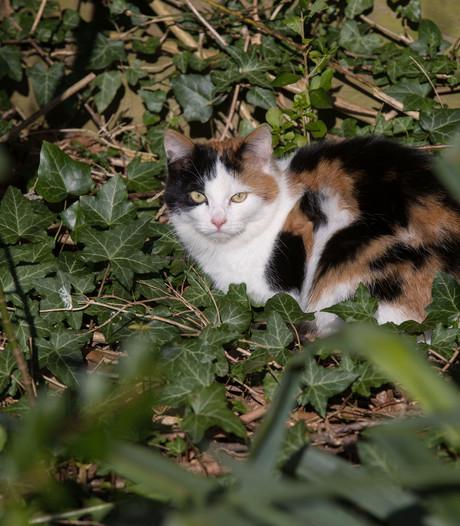 Bosbeheer jaagt op zwerfkatten in het Bentwoud
