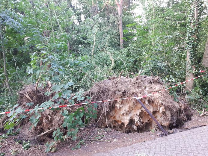 Ontwortelde bomen en afgerukte takken langs de Jipkesbeltweg.