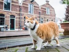 Met een gps-tracker weet je altijd wat je kat of hond uitspookt