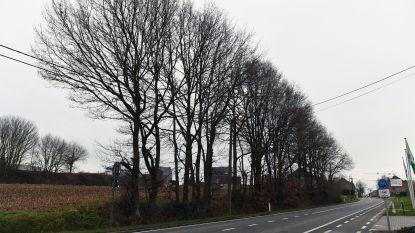 """Torhout verdeelt 100 gratis zomereiken: """"We willen een groenere stad"""""""