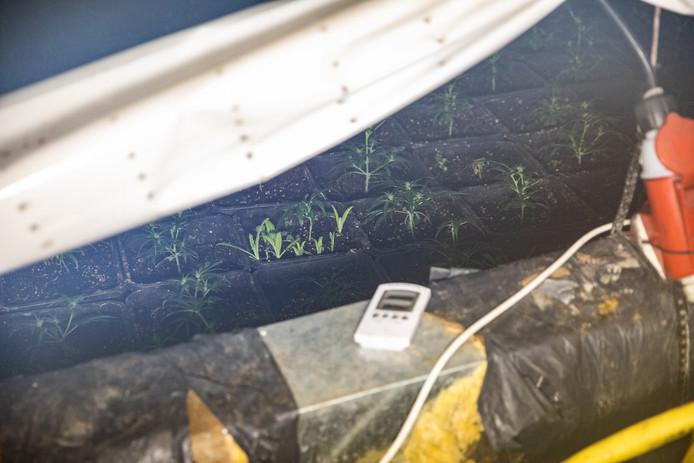 dorpshuis de meiboom; krabbendijke; 2018; vondst hennepkwekerij onder het podium;