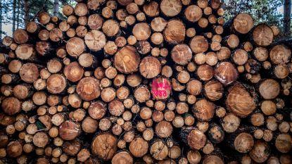 """Bonheiden stuurt motie naar Vlaanderen: """"Er wordt geregeld meer ontbost dan nodig"""""""