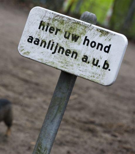 Hondenruzie krijgt staartje via Fixi-app: 'Grave is een roddeldorp'