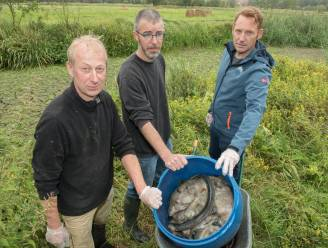 Natuurgebied Paddenbroek droogt uit