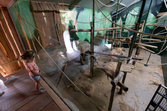 Het nieuwe bonoboverblijf Expeditie Bonobo in Planckendael