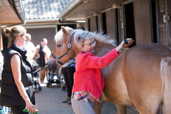 Er blijven in de nieuwe situatie ook enkele paarden staan, die door de cliënten verzorgd kunnen worden. Foto ter illustratie.
