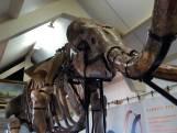 Bekijk hier de grootste mammoet ter wereld die in de Achterhoek staat