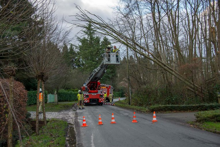 De brandweer van Sint-Niklaas moest uitrukken naar de Bosstraat in Belsele, daar was een boom op de elektriciteitskabels terecht gekomen.