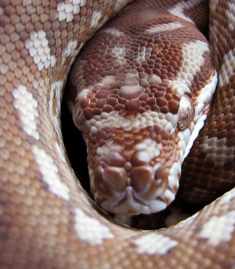 Grote partij huiden van slangen, varanen en leguanen onderschept in Eindhoven: Bedoeld als hesje voor motorclubs