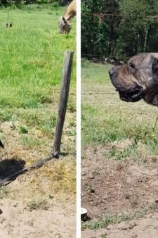 In brandende zon aangetroffen hond blijkt wegloper Lemmy: terug bij baasje
