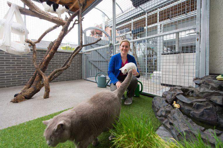 Katrien Melis in het kattenhotel. De dieren kunnen er rondkuieren in gras en klimmen in takken.