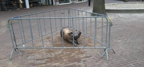 Bronzen varkentje staat na kort ziekbed weer op vertrouwde plek in Oss
