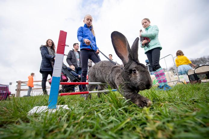 Konijnen die over de hindernissen springen: het is een bijzonder gezicht op  het concours van Het Twentse Ros, op het CSI Twente terrein in Geesteren.